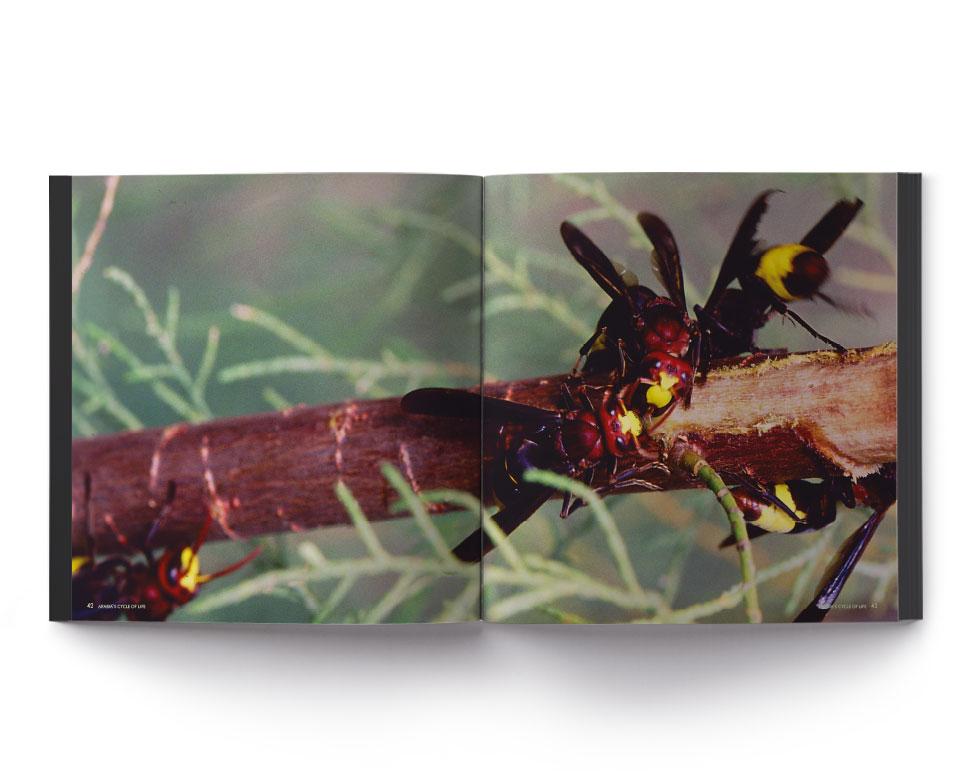 foto offenes Buch natur Wespen Ast