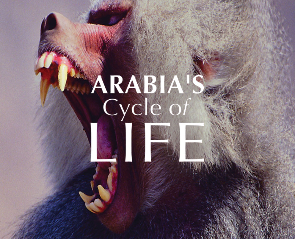 Arabia´s Cycle of Life Header Mobile - Foto brüllender Pavian im Hintergrund