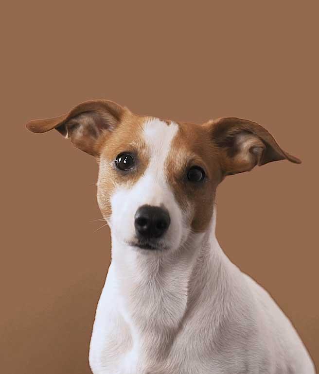 Jamie Team Hund von Aleks & Shantu